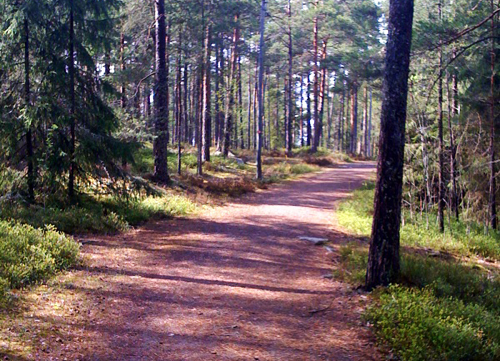 Löprunda i skog och mark.